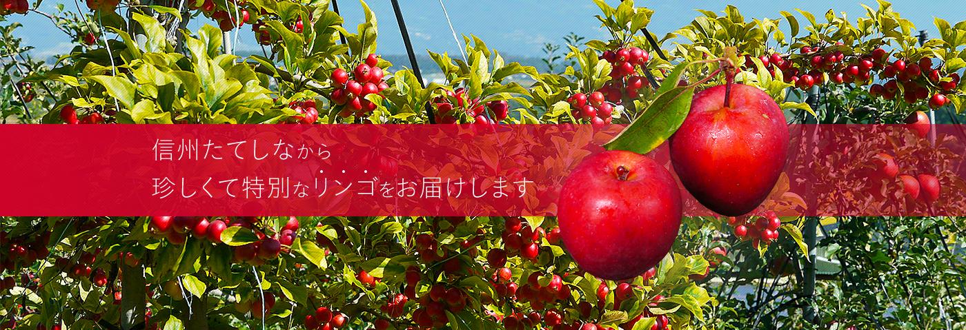 信州たてしなから珍しくて特別なリンゴをお届けします